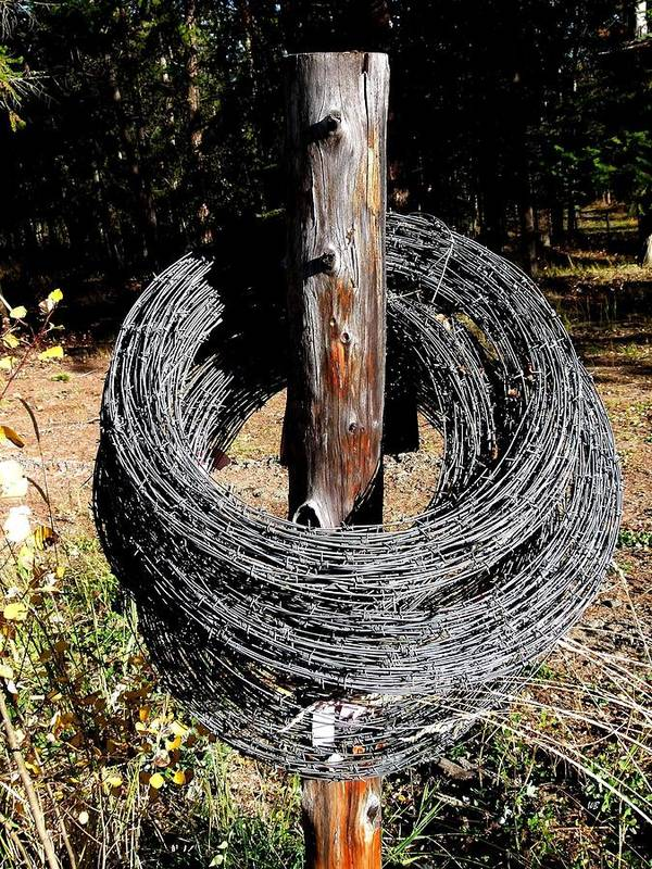 Barbed Wire Art Print featuring the photograph Totally Wired by Will Borden
