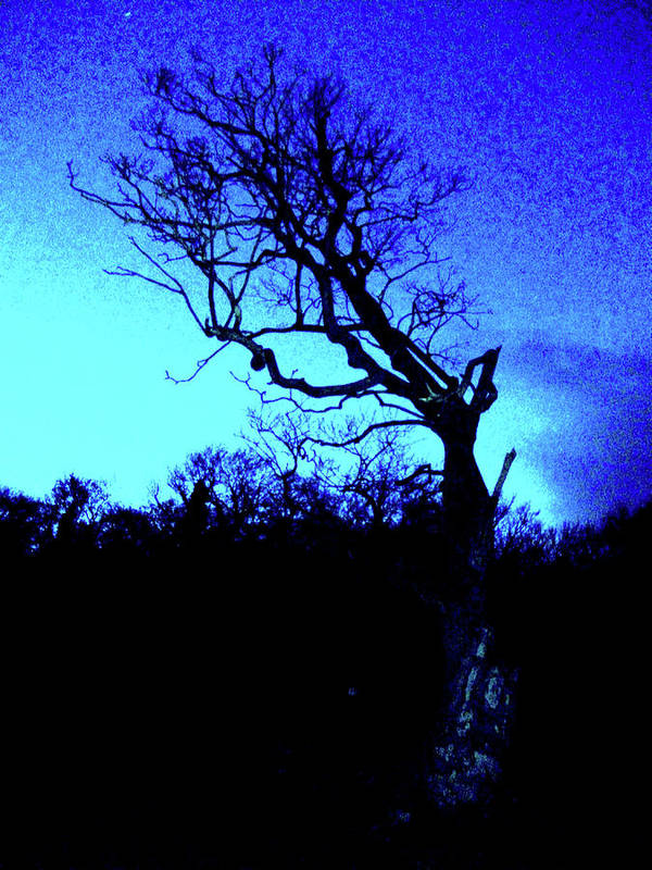 Photography Art Print featuring the photograph Tree At Night by Martin Williams