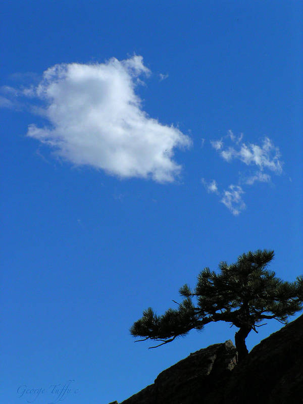 Tree Sky Clouds Colorado Zen Mount Sanitas Mountains Simple Rocky Mountains Art Print featuring the photograph Tree Sky Cloud by George Tuffy