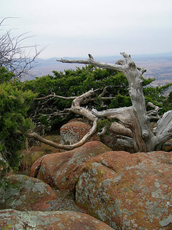 Wichita Mountains Art Print featuring the photograph Twisted View by Gale Cochran-Smith