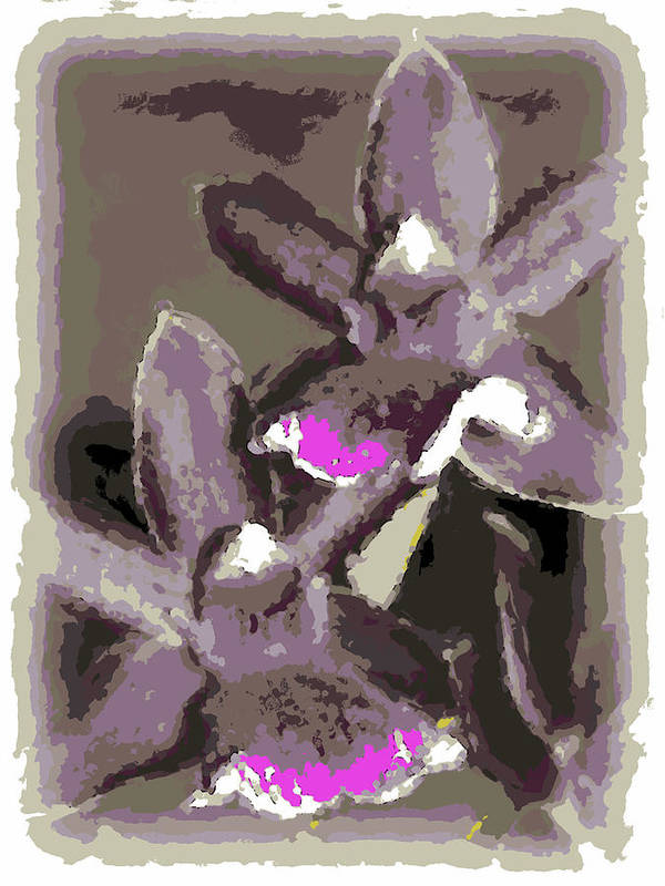 Orchid Art Print featuring the photograph Two Orchids by Ann Tracy