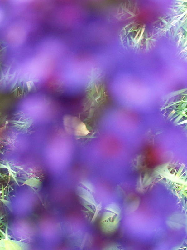 Violet Art Print featuring the photograph Violet Haze by Vijay Sharon Govender