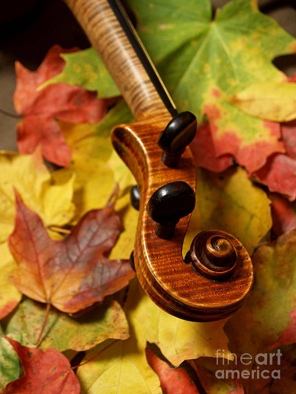 Violin Art Print featuring the photograph Violin Scroll With Fall Maple Leaves by Anna Lisa Yoder