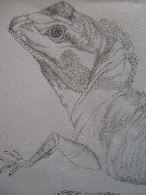 Dragon Art Print featuring the drawing Waterdragon Vertical Close Up by Theodora Dimitrijevic