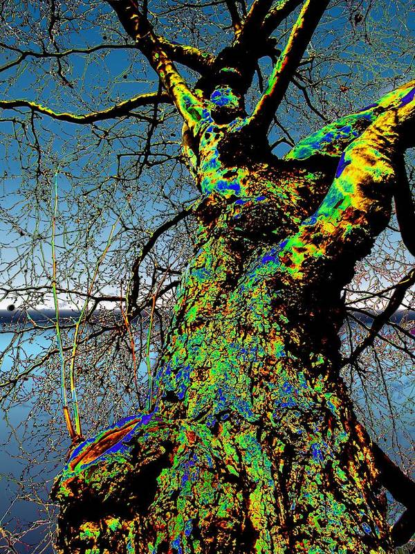 Tree Art Print featuring the photograph Waters Edge by Tim Allen