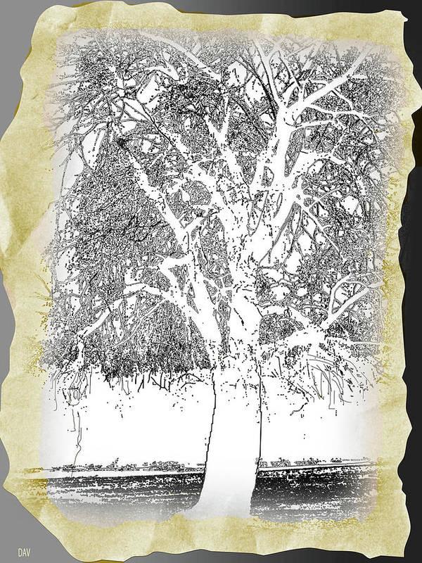 Weeping Willow Designer Art Print featuring the drawing Weeping Willow Designer by Debra   Vatalaro
