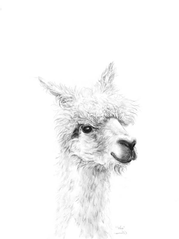 Llama Art Art Print featuring the drawing Wes by K Llamas
