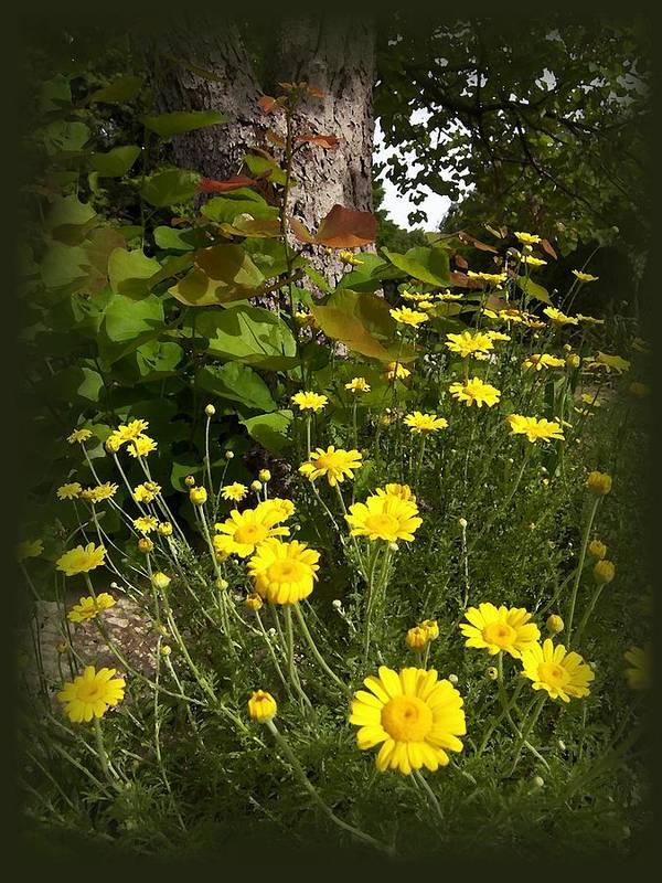 Flower Art Print featuring the photograph Wild Flowers by Jim Darnall