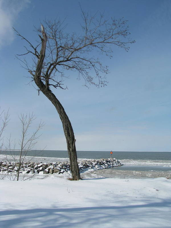 Art Print featuring the photograph Winter On Lake Erie by Trisha Dahm
