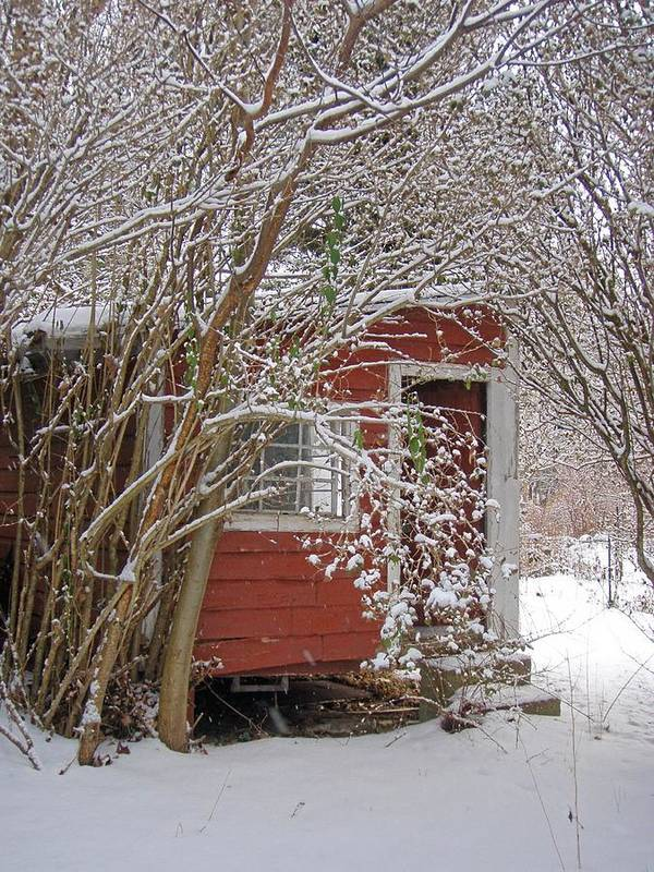 Shed Old Red Snow Print featuring the photograph Winter Reading Room by Kristine Nora