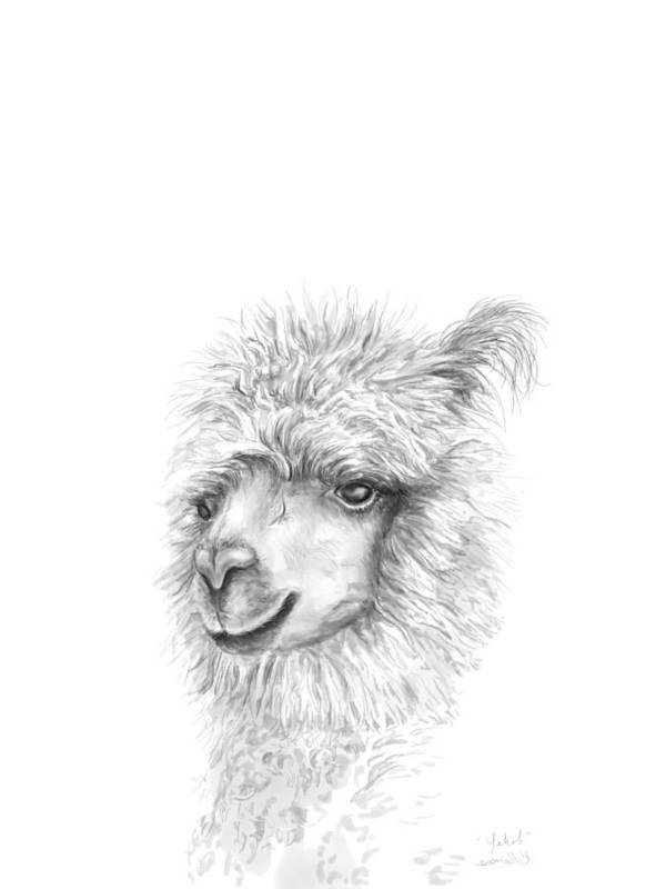 Llama Art Art Print featuring the drawing Yakob by K Llamas