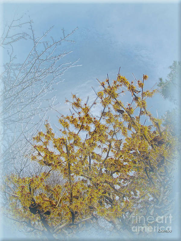 Tree Art Print featuring the photograph Yellow Tree by Eena Bo