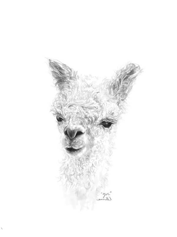 Llama Art Art Print featuring the drawing Zoe by K Llamas