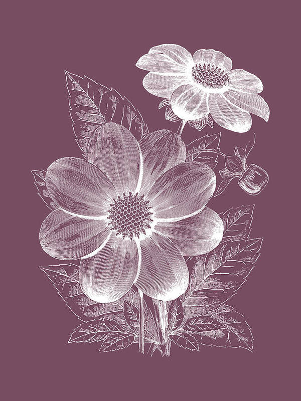 Flower Art Print featuring the mixed media Dahlias Purple Flower by Naxart Studio