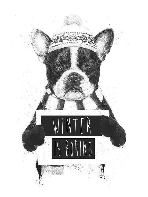 Bulldog Art Print featuring the mixed media Winter Is Boring by Balazs Solti