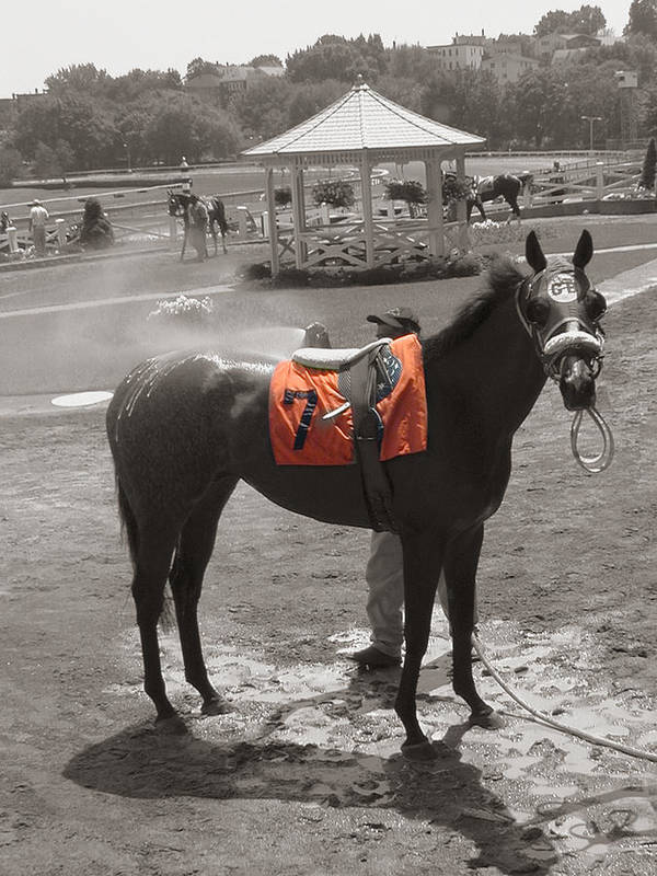 Suffolk Downs Art Print featuring the photograph Lucky No. 7 by Heather Weikel