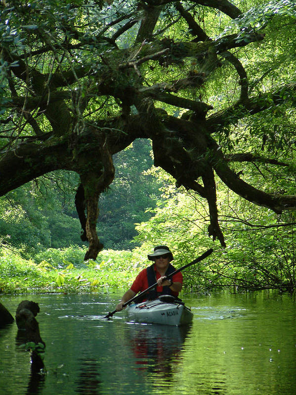 Kayak Art Print featuring the photograph Kayaking In Dismal Swamp by Charles Ridgway