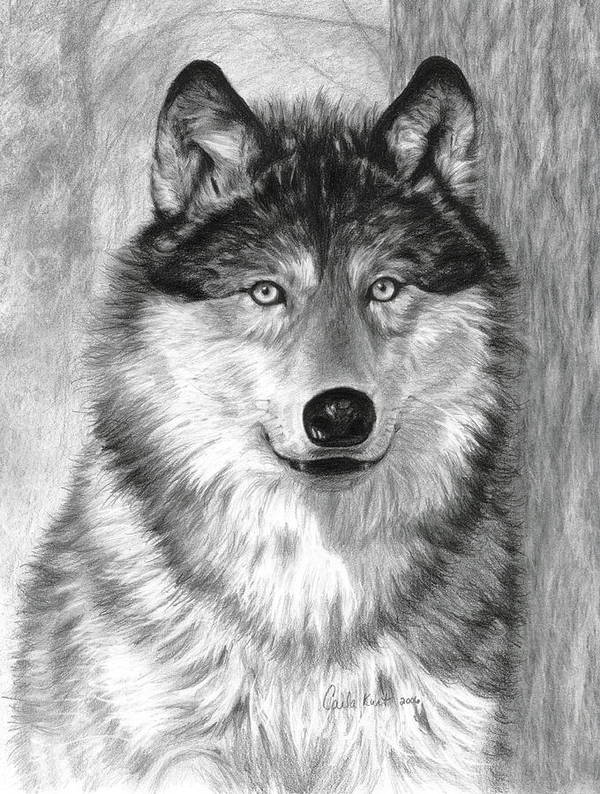 Wolf Art Print featuring the drawing Alpha by Carla Kurt