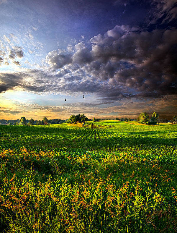 Horizons Art Print featuring the photograph All I Need by Phil Koch