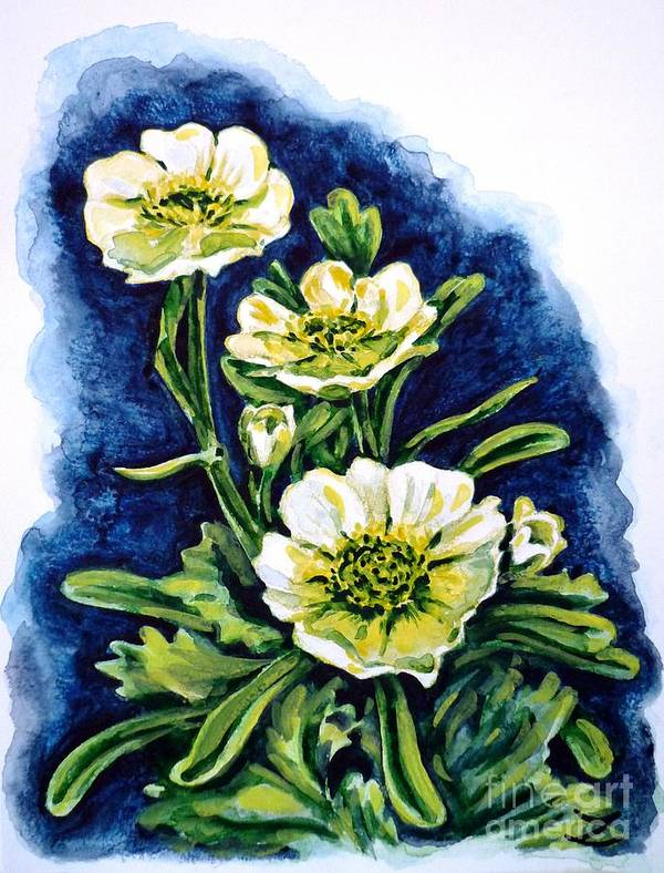 Alpine Ranunculus Art Print featuring the painting Alpine Ranunculus by Zaira Dzhaubaeva