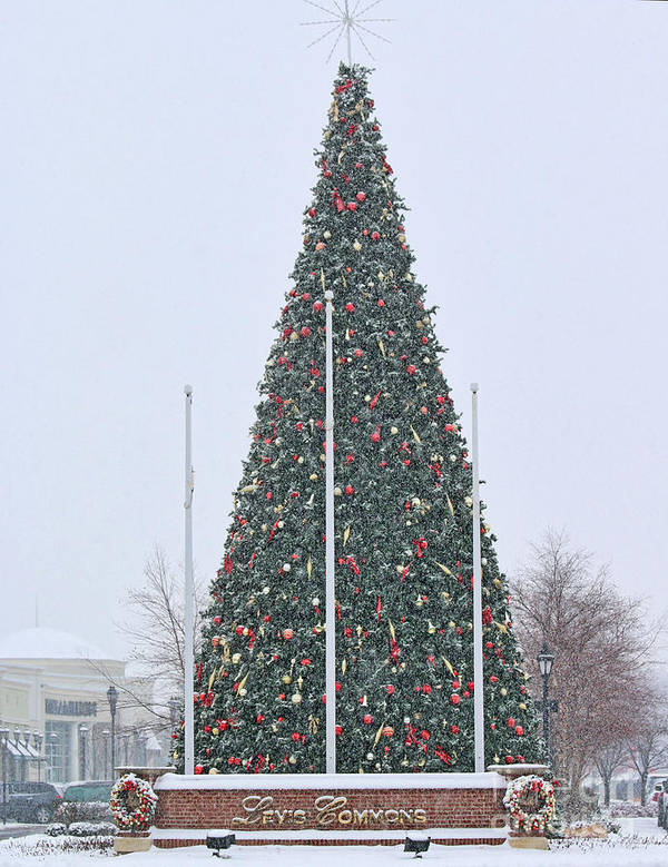 Levis Commons Art Print featuring the photograph Levis Commons Christmas Tree by Jack Schultz
