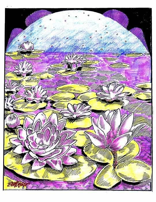 Lilies Of The Lake Art Print featuring the drawing Lilies Of The Lake by Seth Weaver