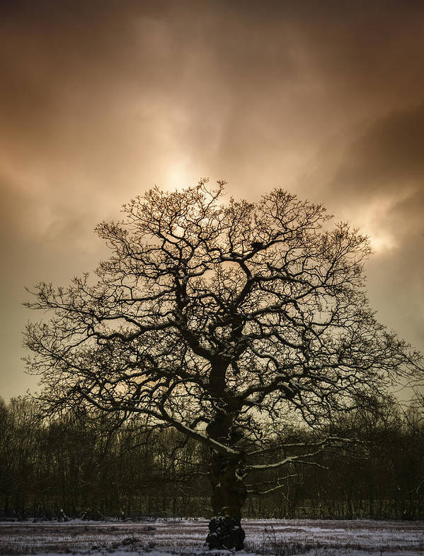 Tree Art Print featuring the photograph Lone Tree by Amanda Elwell