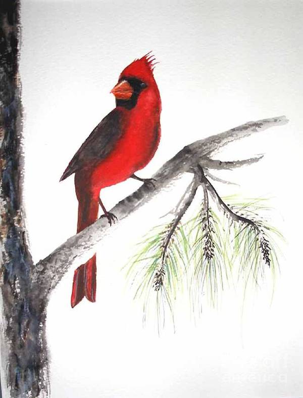 Bird Art Print featuring the painting Red Cardinal by Sibby S