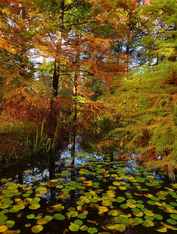 Autumn Art Print featuring the photograph Thoreau's Pride by Connie Handscomb