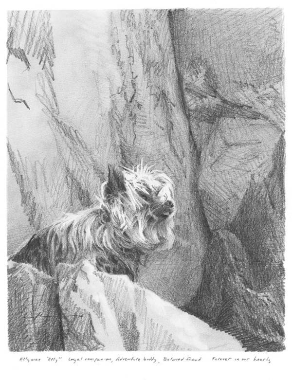 <a Href=http://miketheuer.com Target =_blank>www.miketheuer.com</a> Yorkie Dog On A Cliff Pencil Portrait Art Print featuring the drawing Yorkie Dog On A Cliff Pencil Portrait by Mike Theuer