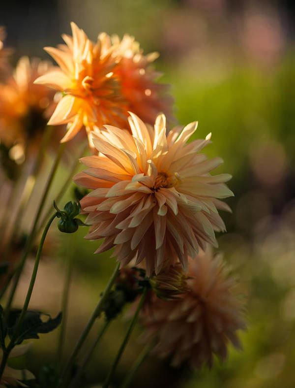 Flower Art Print featuring the photograph Brilliant Sunlight by Mike Reid