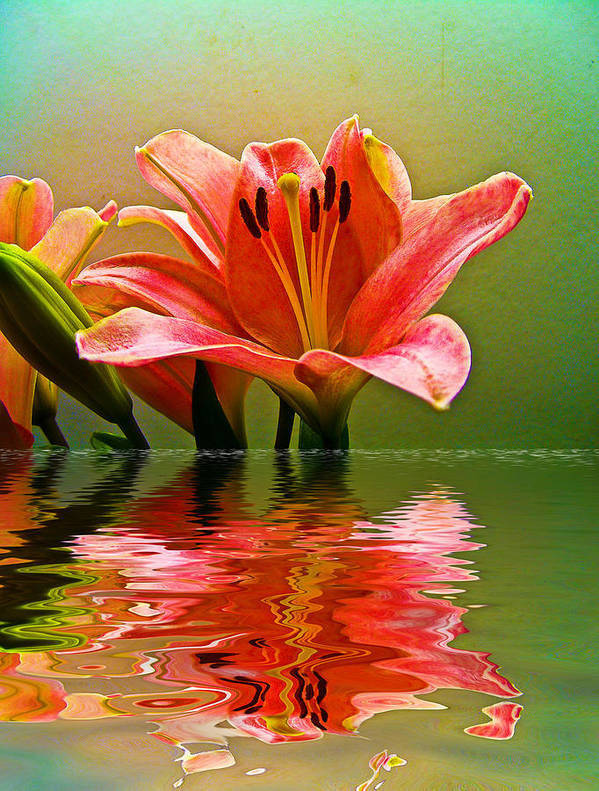 Art Print featuring the photograph Flooded Lily by Bill Barber