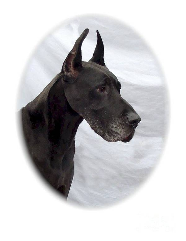 Great Dane Digital Art Art Print featuring the digital art Great Dane 189 by Larry Matthews