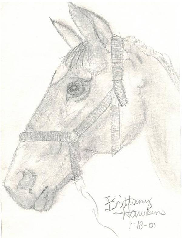 Art Print featuring the drawing Horse 1.18.01 by Brittany Clifton