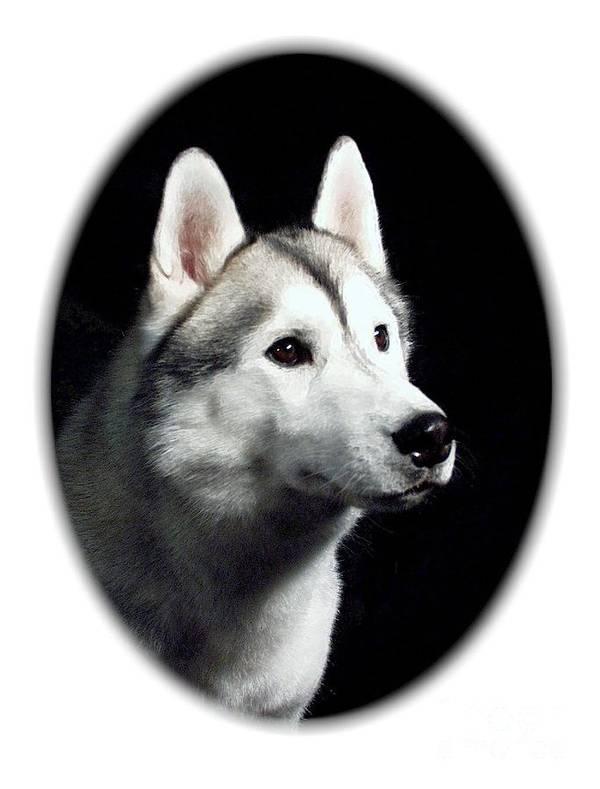 Siberian Husky Digital Art Art Print featuring the digital art Siberian Husky 271 by Larry Matthews