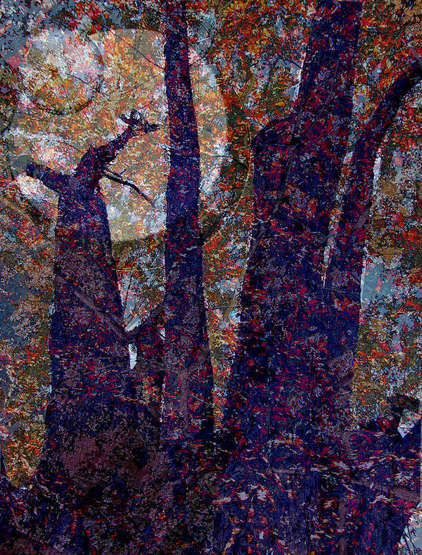 Tree Art Print featuring the photograph Splayed Trunks by Carol Everhart Roper
