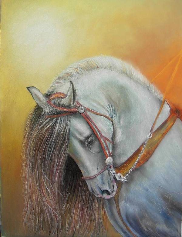 Horse Art Print featuring the painting Andaluz by Ceci Watson