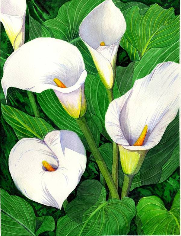 Lily Art Print featuring the painting Calla Lilies by Catherine G McElroy