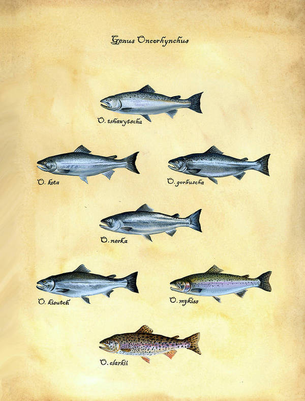 Salmon Art Print featuring the painting Genus Oncorhynchus by Logan Parsons
