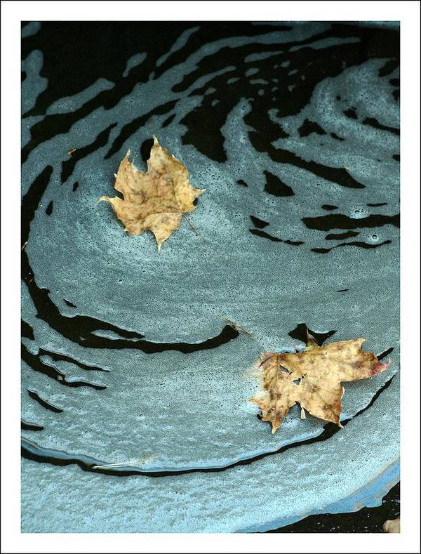 Leaves Art Print featuring the photograph Leaving Ripples by Roberta Gennaci-Attalla