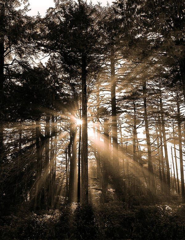 Forest Art Print featuring the photograph Light Through The Forest by Naman Imagery