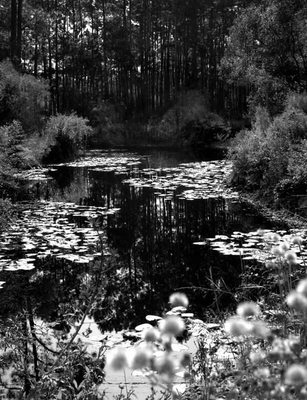 Landscape Art Print featuring the photograph Monet Lake by Matthew Altenbach