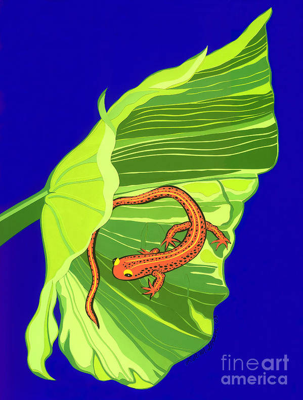 Nature Art Print featuring the drawing Salamander by Lucyna A M Green