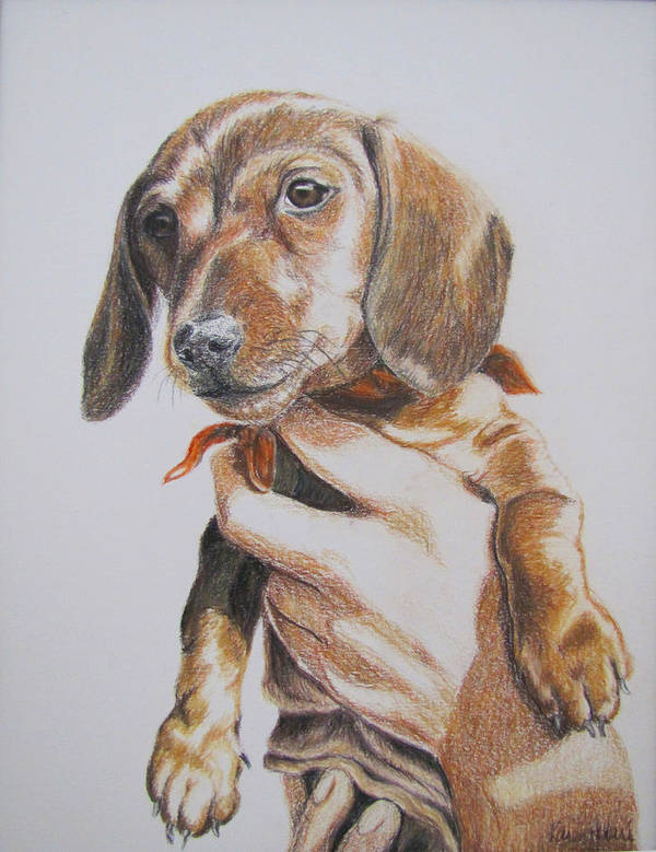 Puppy Art Print featuring the drawing Sambo by Karen Ilari
