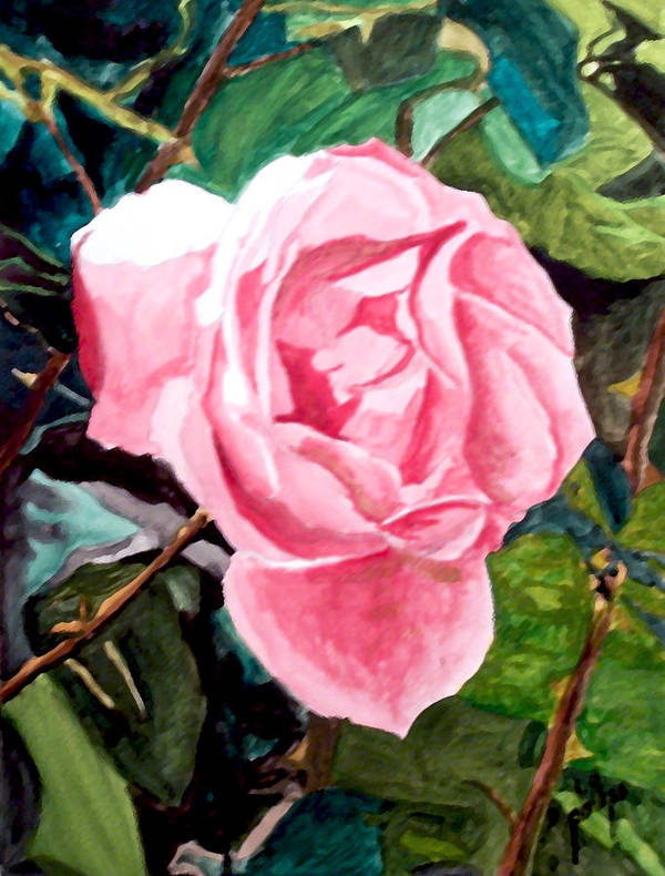 Rose Art Print featuring the painting September Rose by Jim Phillips