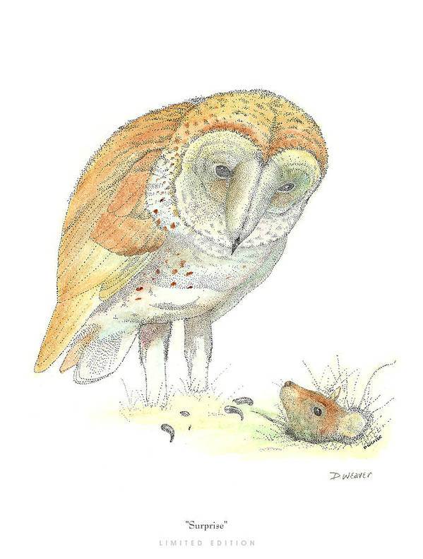 Owl Standing Over Field Mouse Art Print featuring the drawing Surprise by David Weaver