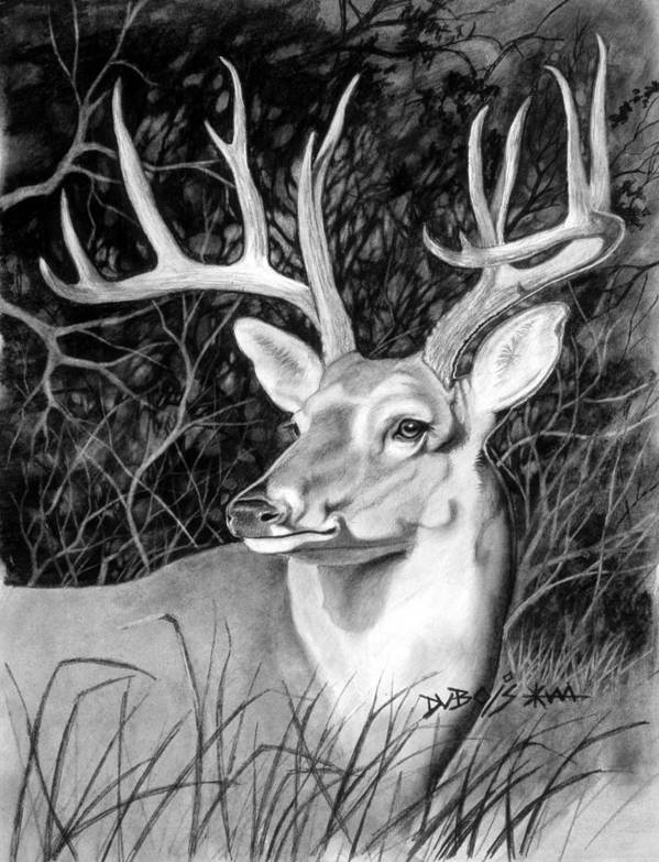 Deer Art Print featuring the drawing The Buck by Howard Dubois