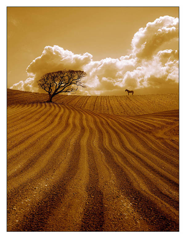 Field Art Print featuring the photograph The Ploughed Field by Mal Bray