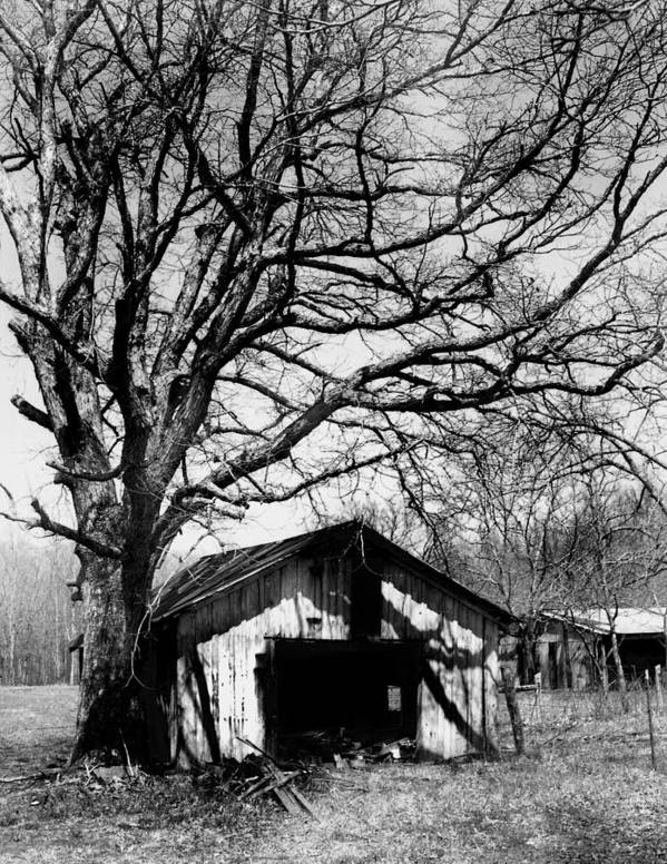 Ansel Adams Art Print featuring the photograph Tree-hut by Curtis J Neeley Jr