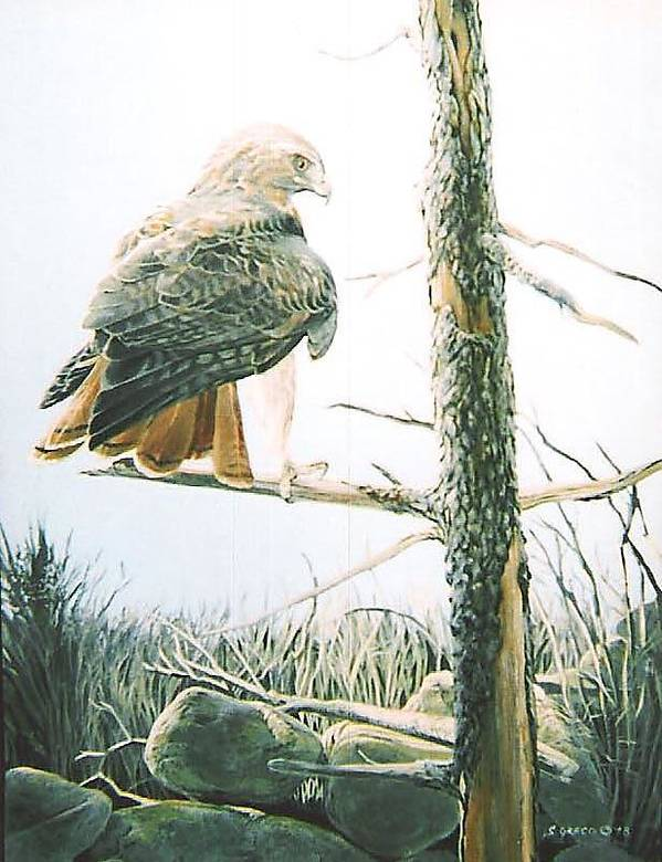 Wildlife Art Print featuring the painting Redtail Hawk by Steve Greco
